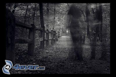 mörk skog, skugga, trästaket