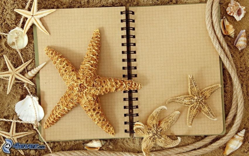 musslor, sjöstjärnor, dagbok, rep