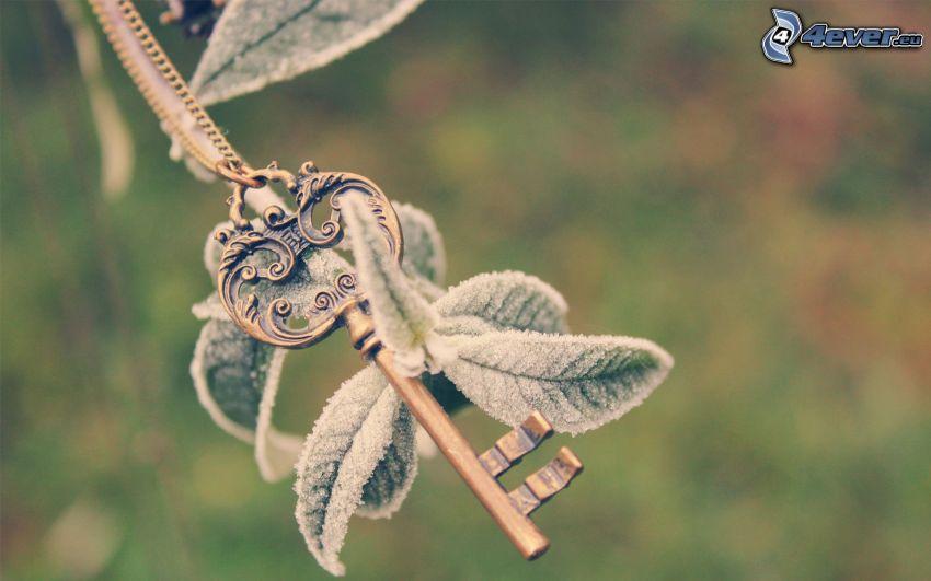 nyckel, löv