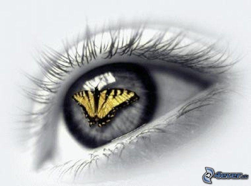 öga, gul fjäril, spegling