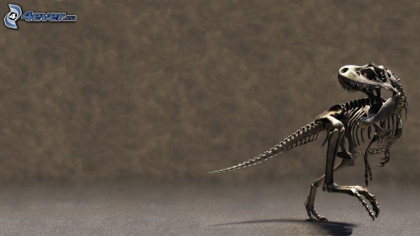 skelett, dinosaurie