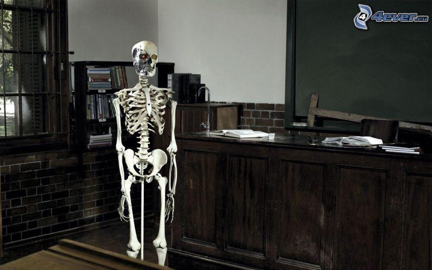 skelett, klass