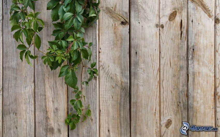 trästaket, växt, gröna blad