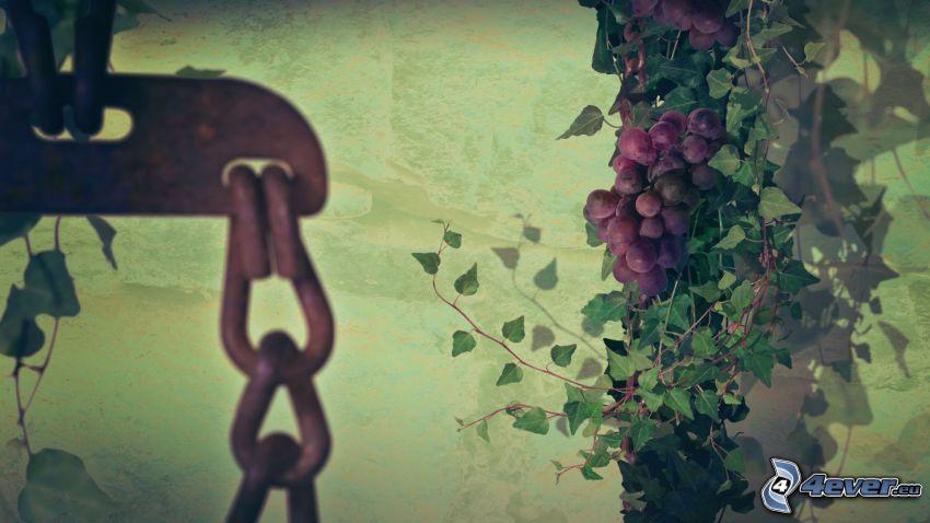 vindruvor, kedja