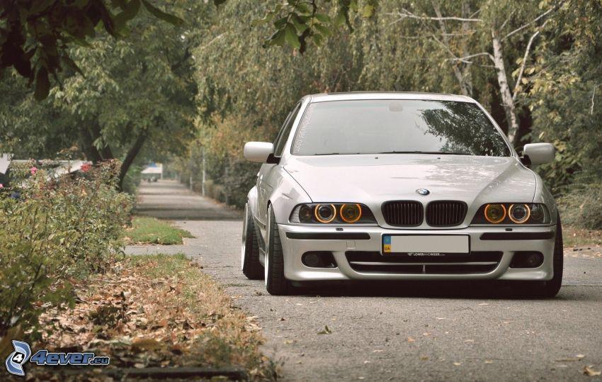 BMW E39, väg, träd