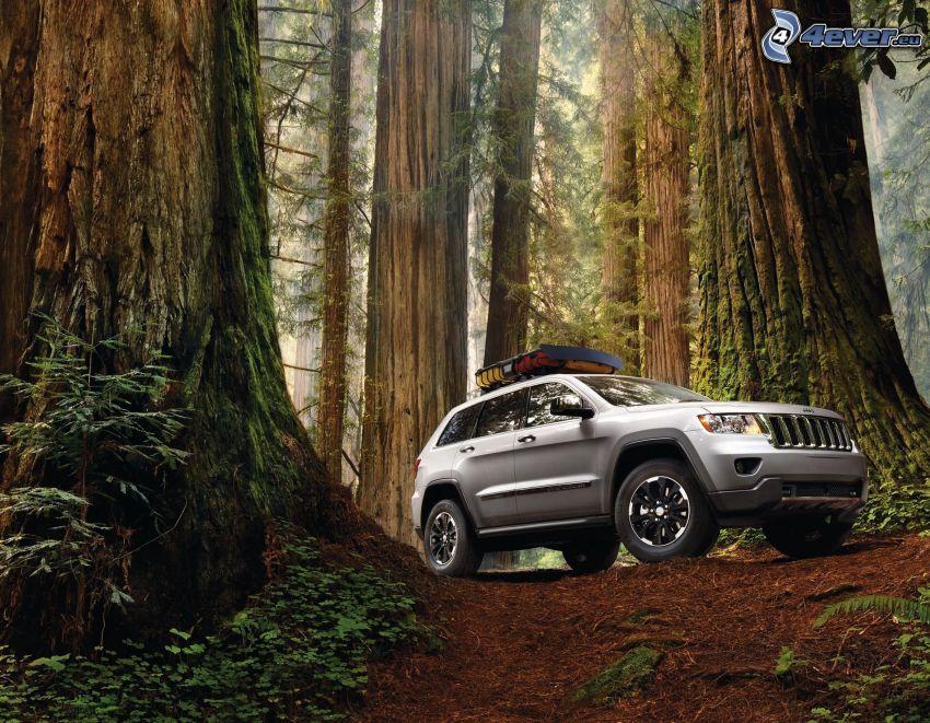 Jeep Grand Cherokee, off-road bil, skog, sequoior