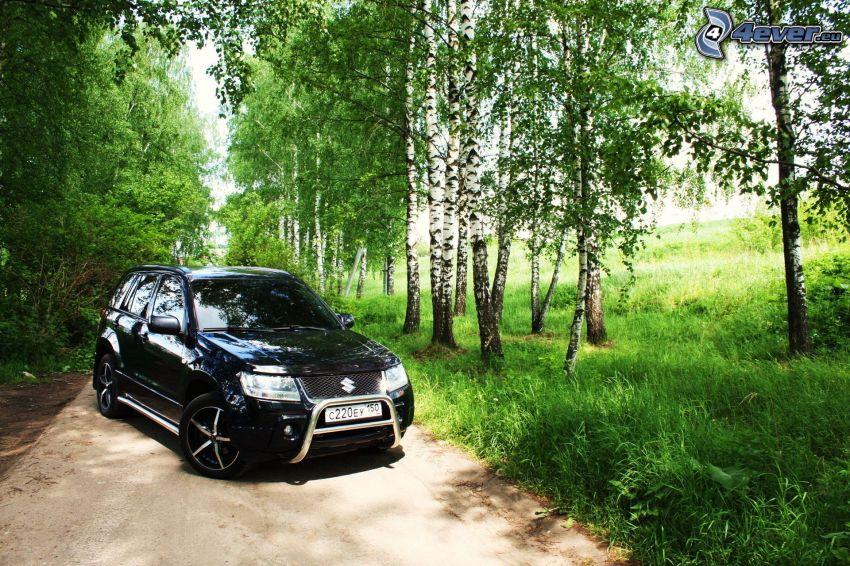 Suzuki Grand Vitara, björkskog