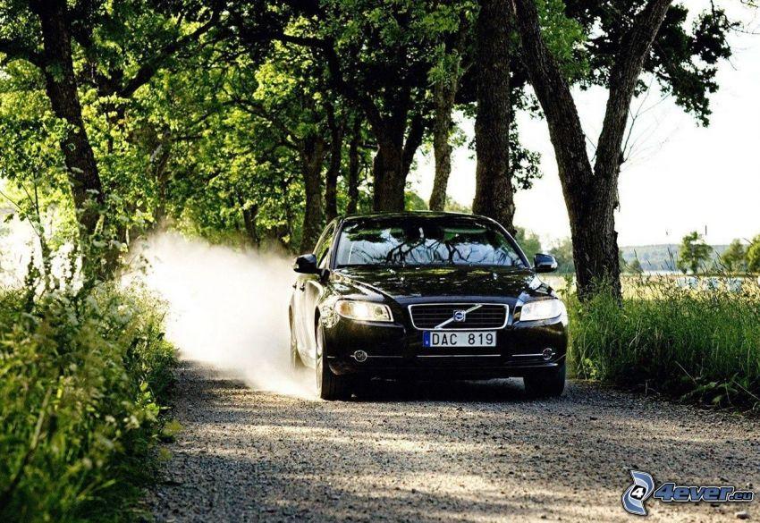 Volvo S80, skogsväg, damm, träd