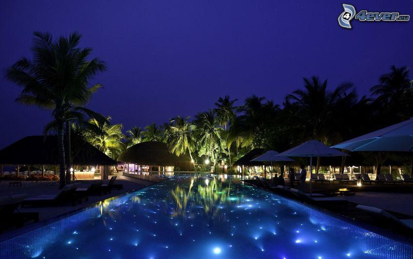 bassäng, kväll, palmer
