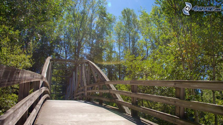 Bothell Bridge, träbro, gröna träd