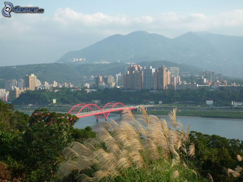 Guandu Bridge, högt gräs, skyskrapor