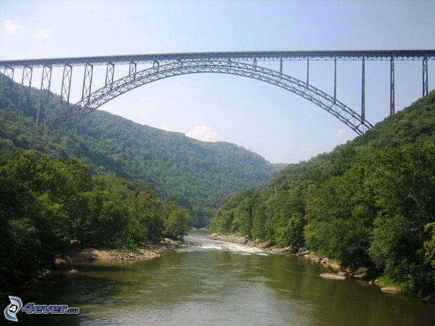 New River Gorge Bridge, flod, skog