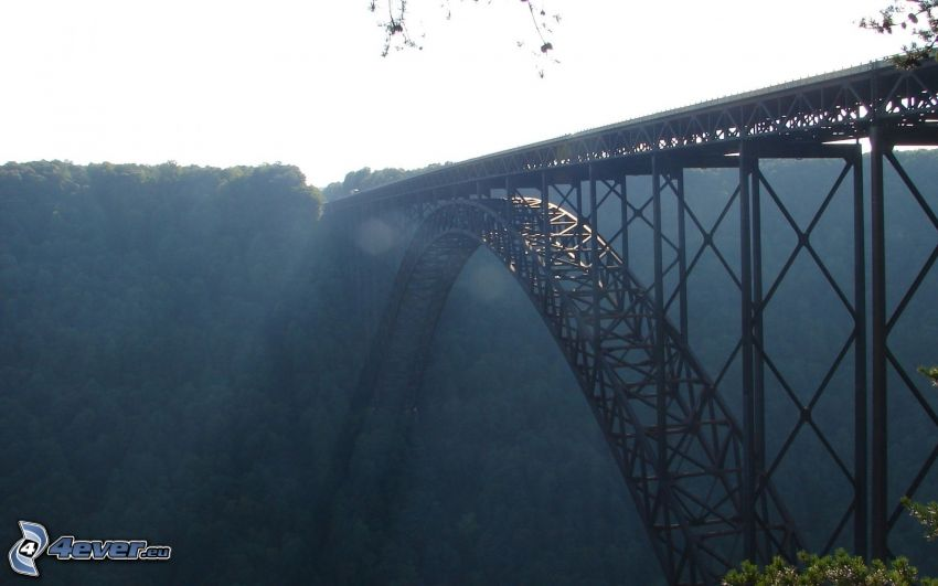 New River Gorge Bridge, skog
