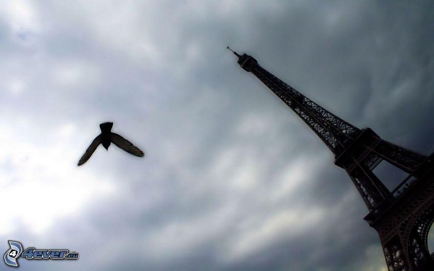 Eiffeltornet, fågel, himmel