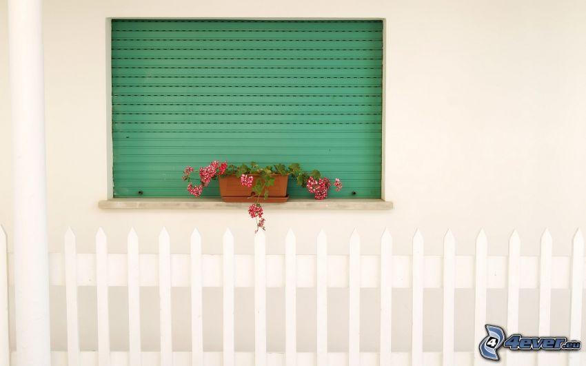 fönster, blommor, staket