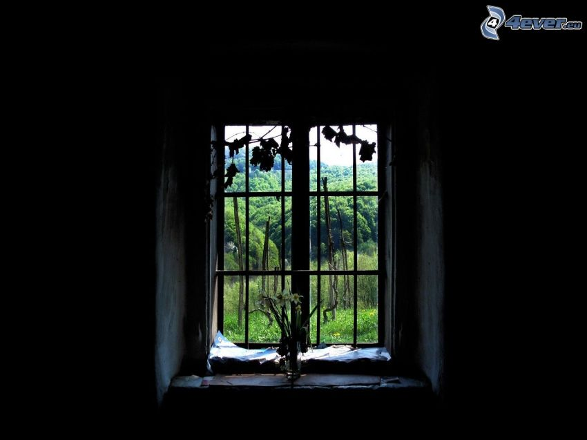 gammalt fönster, skog, växter