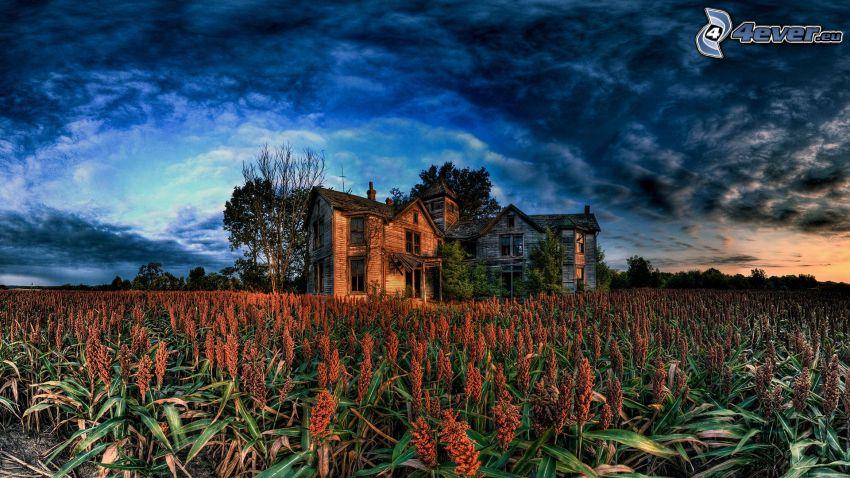 gammalt trähus, övergivet hus, åker, moln, HDR