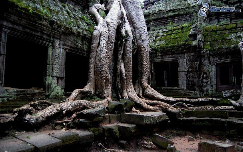 Angkor Wat, gammal byggnad, träd