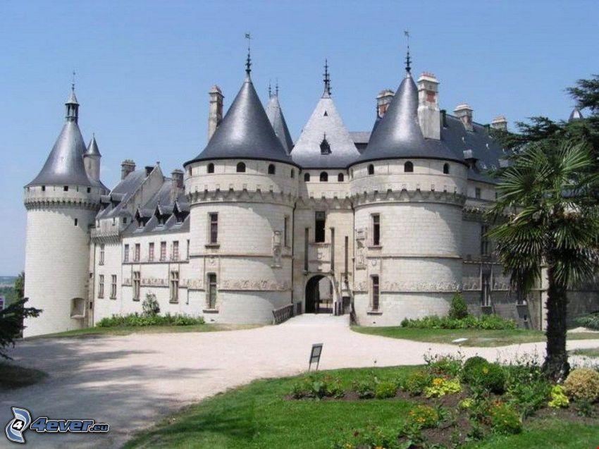 Château de Chaumont, palm