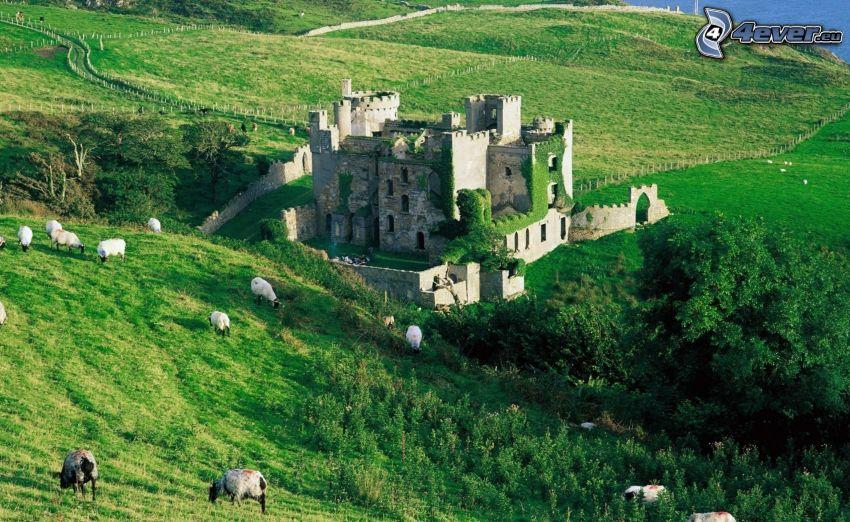 Clifden, Irland, slott, kullar, grönska, får