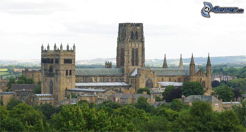 Durham katedralen, träd