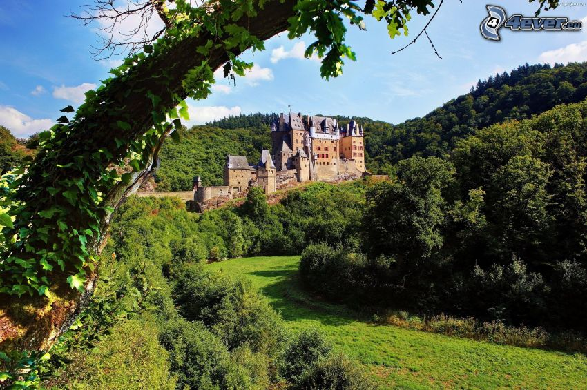 Eltz Castle, grön skog, kulle, gren