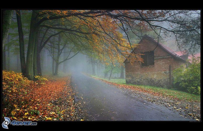 höstväg mellan träden, gammalt hus, gula löv, skog, dimma, höst