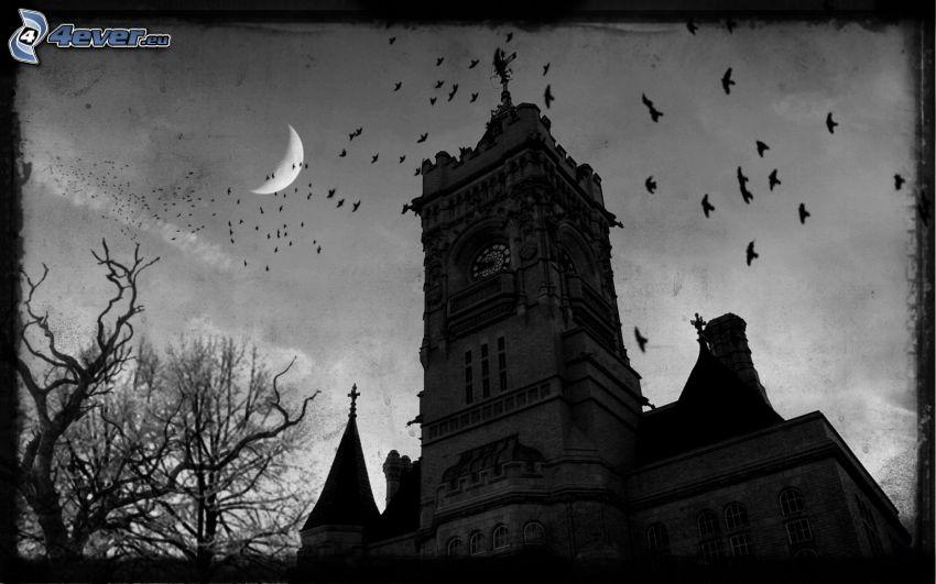 kyrka, måne, fågelflock