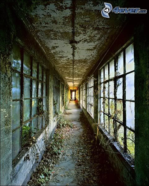 övergiven fabrikkorridor, trasiga fönster, löv, övergiven byggnad