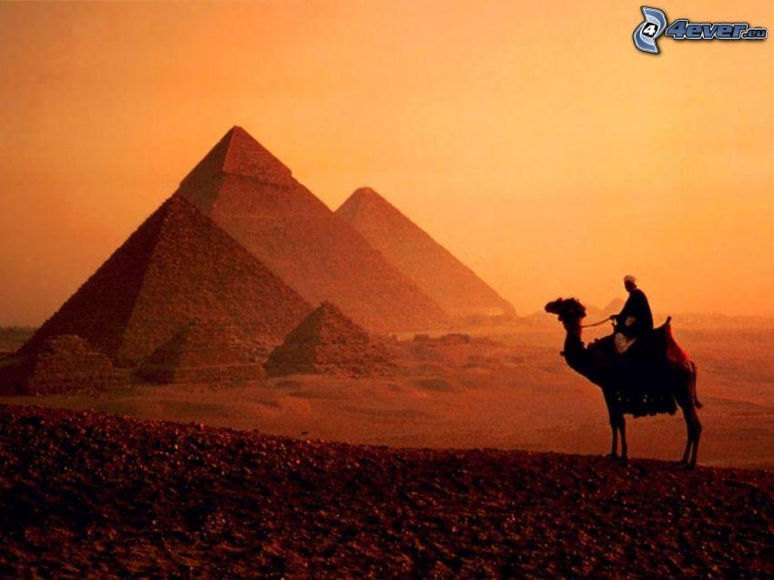 pyramiderna i Giza, sand, Egypten, kamel, arab