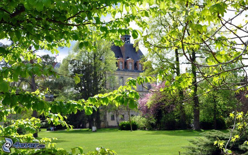 slott, park, träd