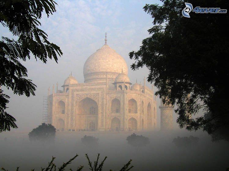 Taj Mahal, Indien, dimma, träd
