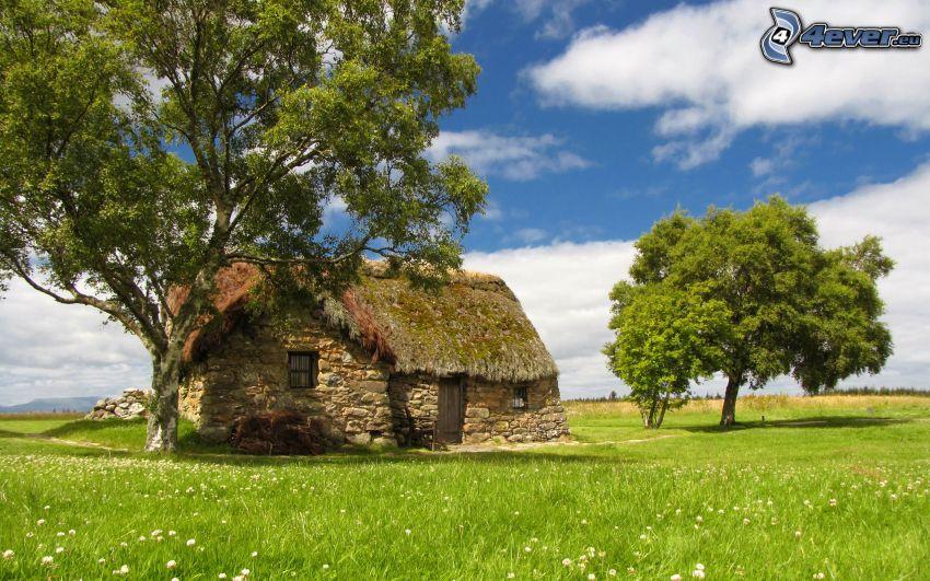 hus, träd, gräsmatta