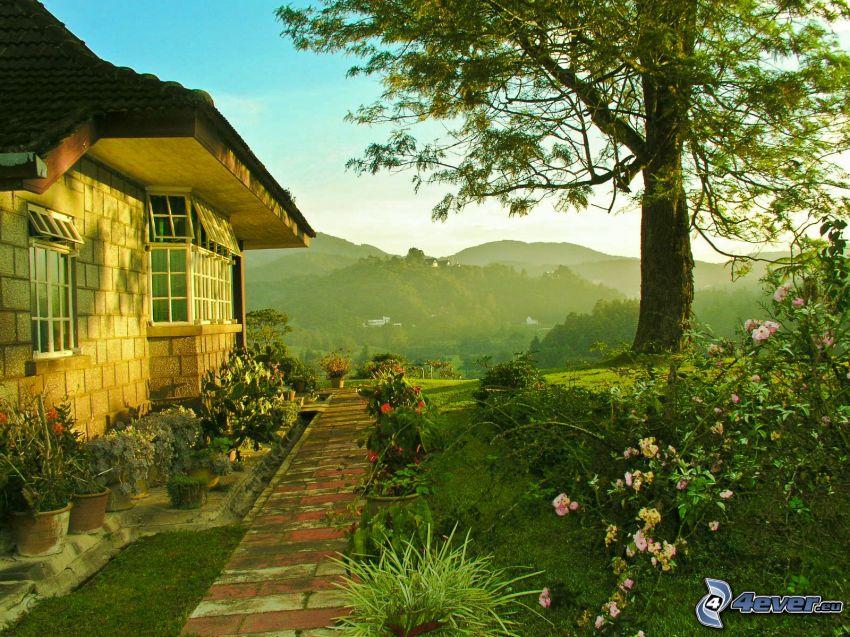 hus, trottoar, träd, blommor