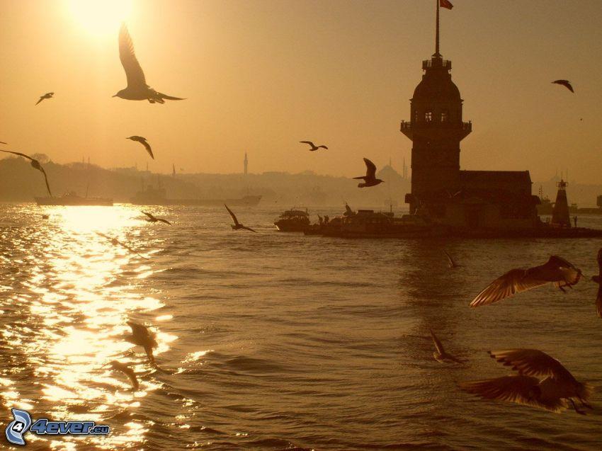 Kiz Kulesi, solnedgång, måsar, hav