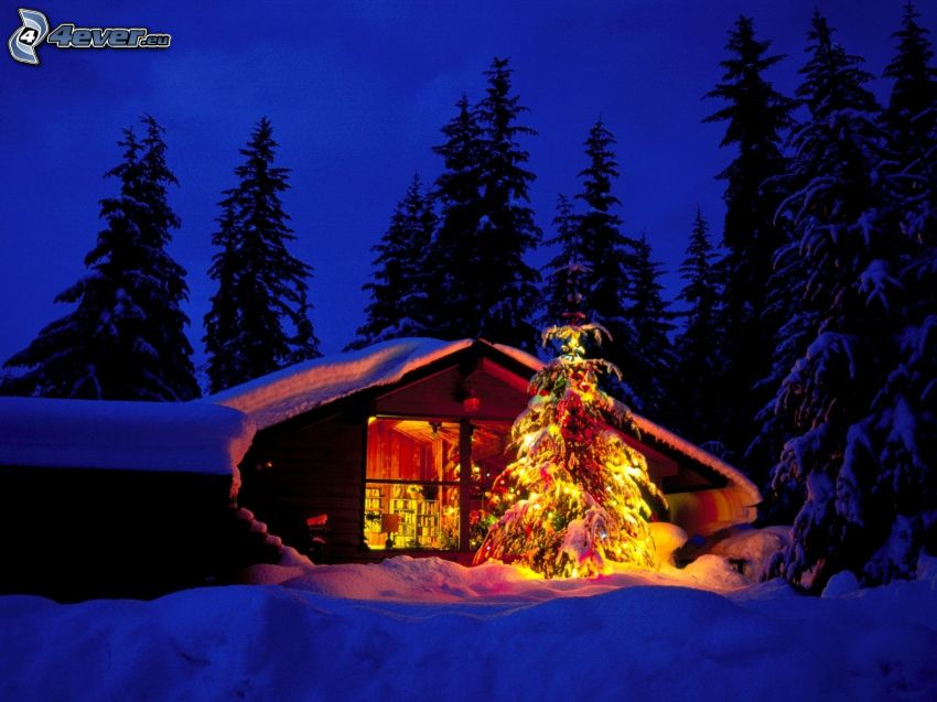 liten fjällstuga, julgran, snöklädda träd, snö