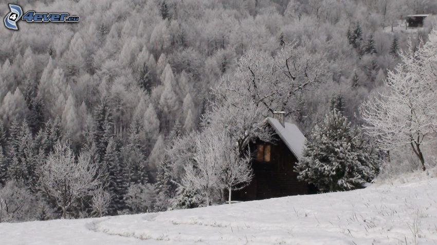 liten fjällstuga, snöig skog
