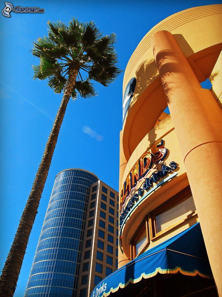 byggnader, palm