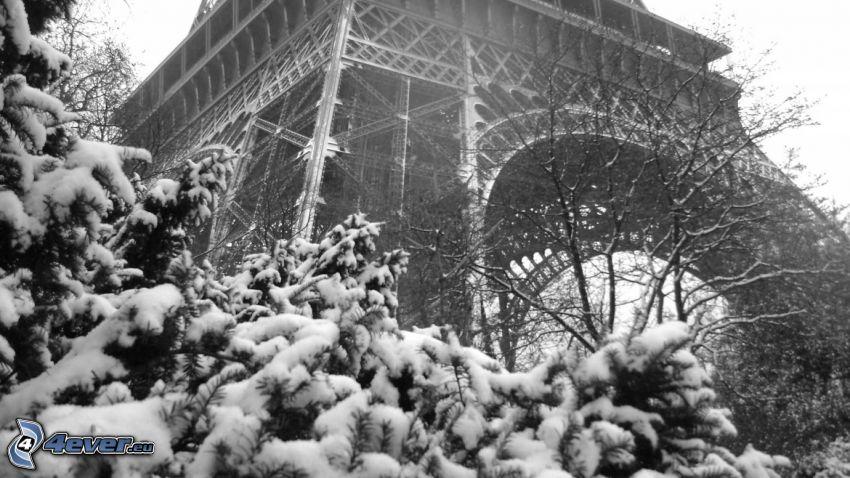 Eiffeltornet, snöigt träd, svartvitt foto