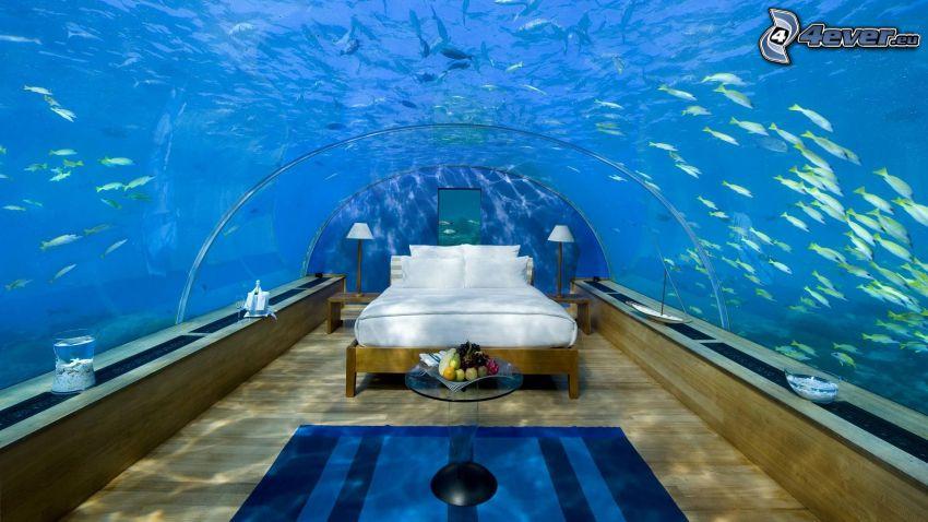 hotel Conrad, undervattensrum, Maldiverna, fiskar, azurblå hav