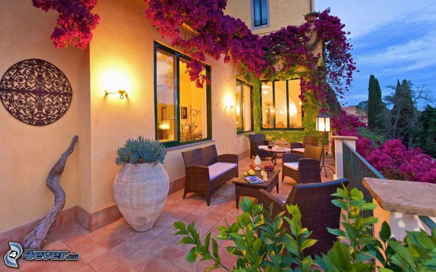 terrass, fåtöljer, fönster, blommor