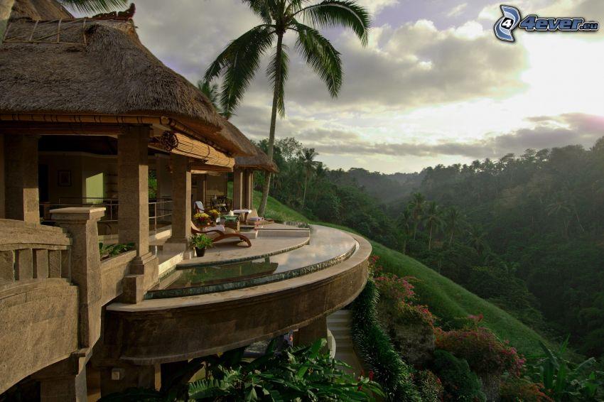 terrass, lyxigt vardagsrum, djungel
