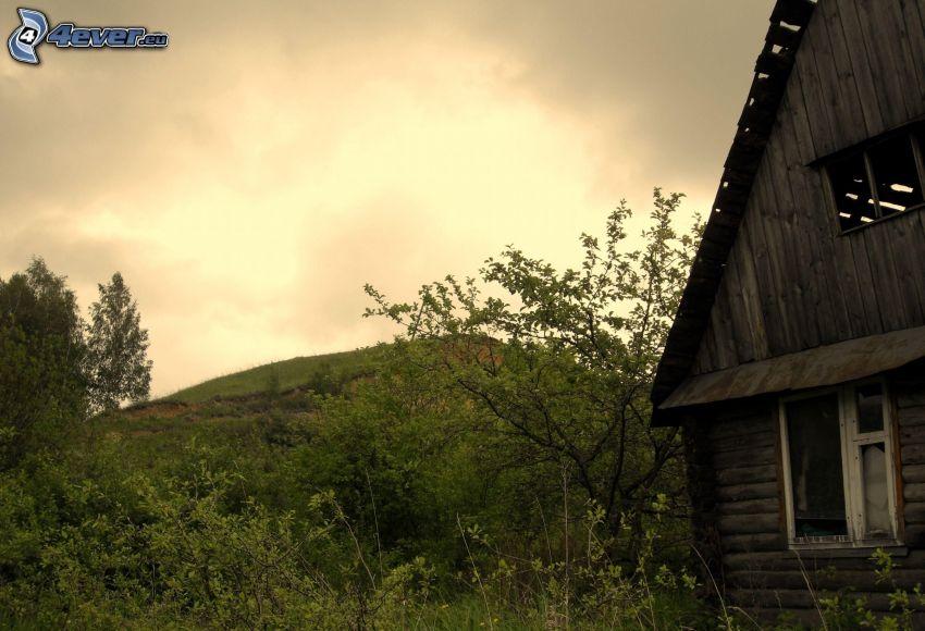 övergivet hus, trästuga, grönska, träd