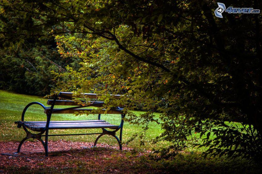 bänk i park, buske