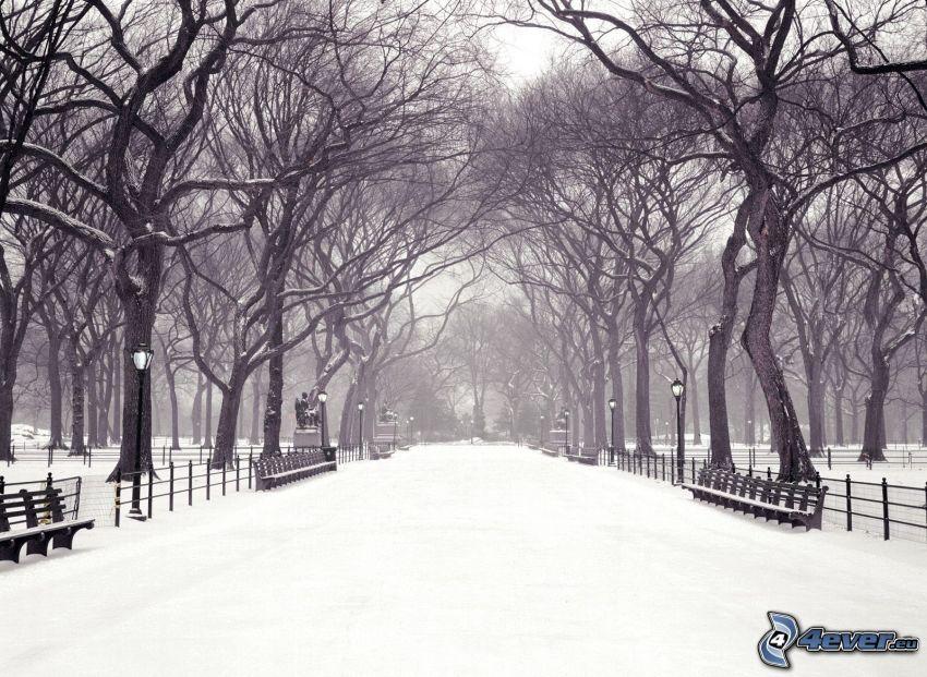 Central Park, snöig park