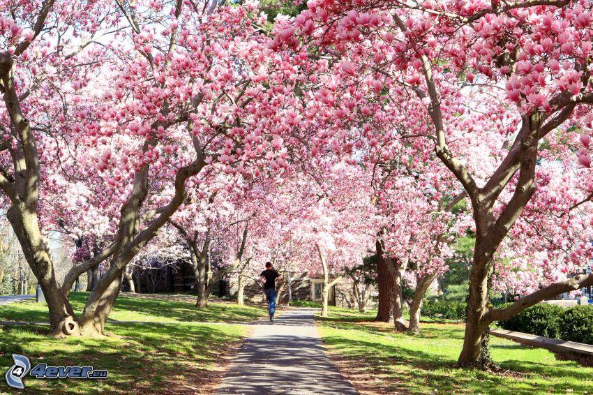 magnolia, trottoar, löpare