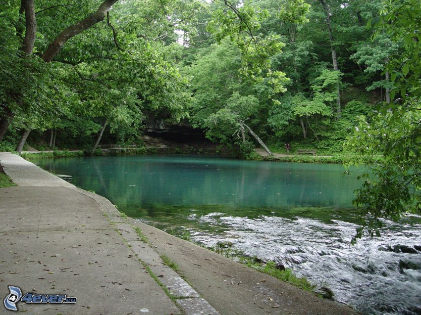 sjö, gröna träd, trottoar