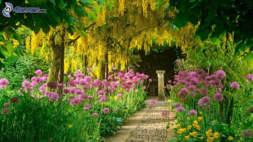trädgård, rosa blommor, trottoar