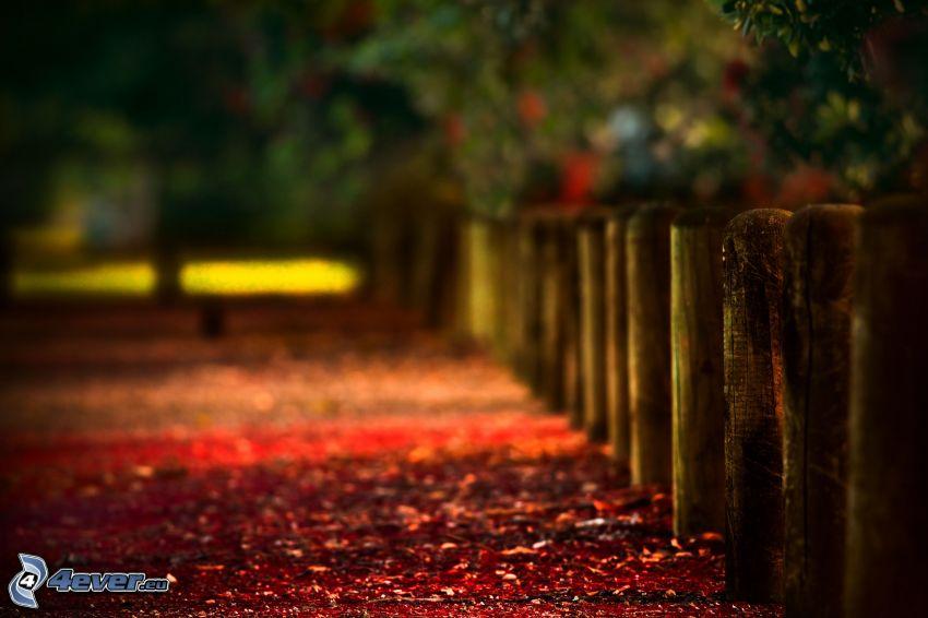 trästaket, röda blad, torra löv
