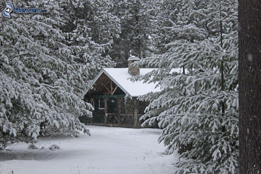 snöig stuga, snöig skog
